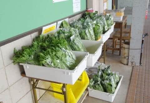 写真:無料野菜市場に並んだ葉物野菜